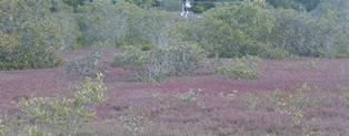 Bensville wetland