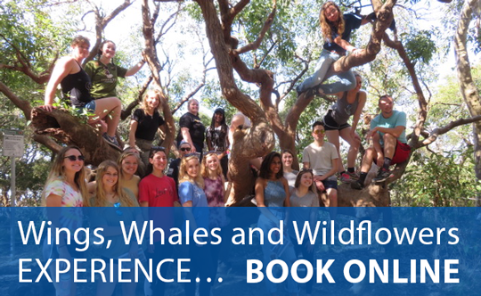 Wings, Whales and Wildflowers Experience