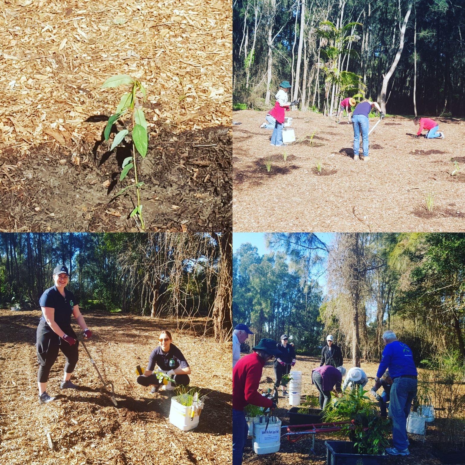 CEN Youth National Tree Planting Day 2020