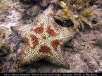md athenea seastar