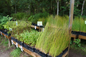 CEN Wildplant Nursery Sale Day